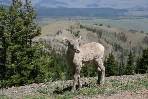 IMAGE: http://smerryfield.smugmug.com/Vacation/Yellowstone-National-Park-2007/IMG2961/184686554_3obyC-M.jpg