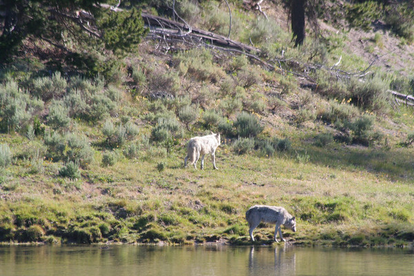 IMAGE: http://smerryfield.smugmug.com/Vacation/Yellowstone-National-Park-2007/IMG3196/184383596_ksd59-M.jpg